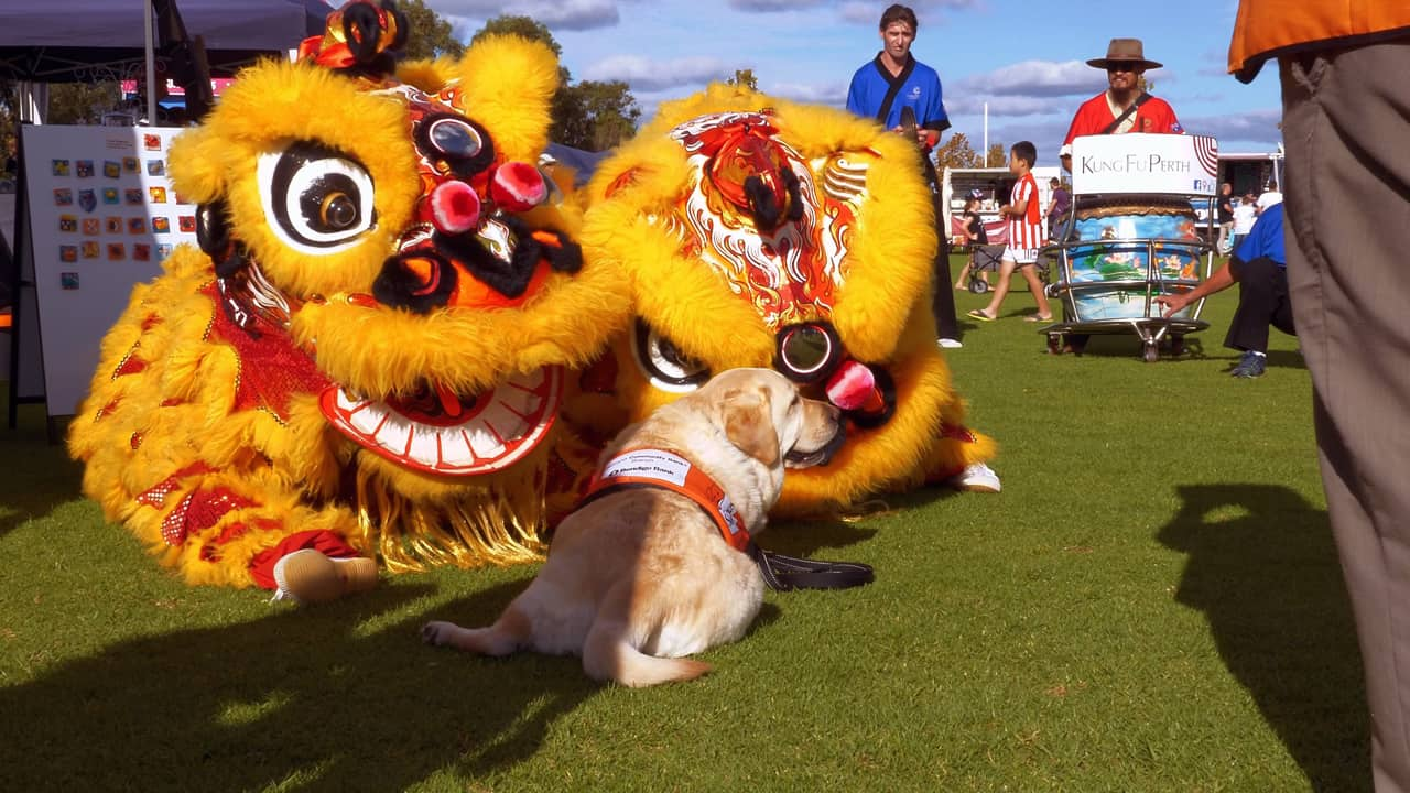 Lion Dance Ging Mo Cockburn Cultural Fair Australia