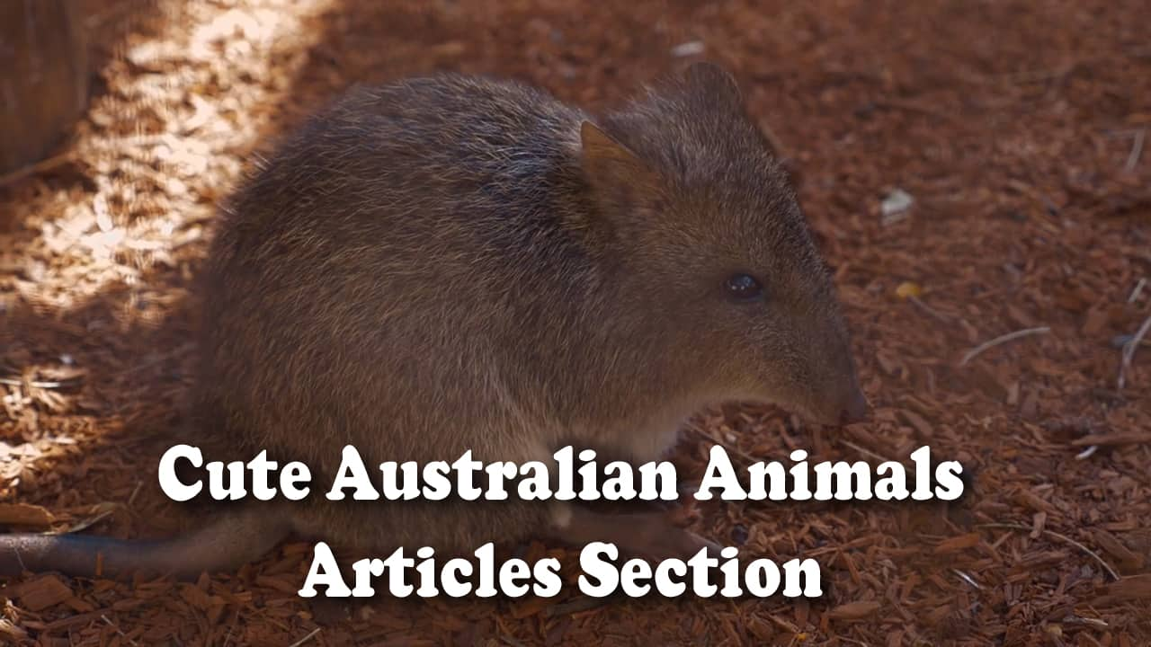 Cute Australian animals articles section category