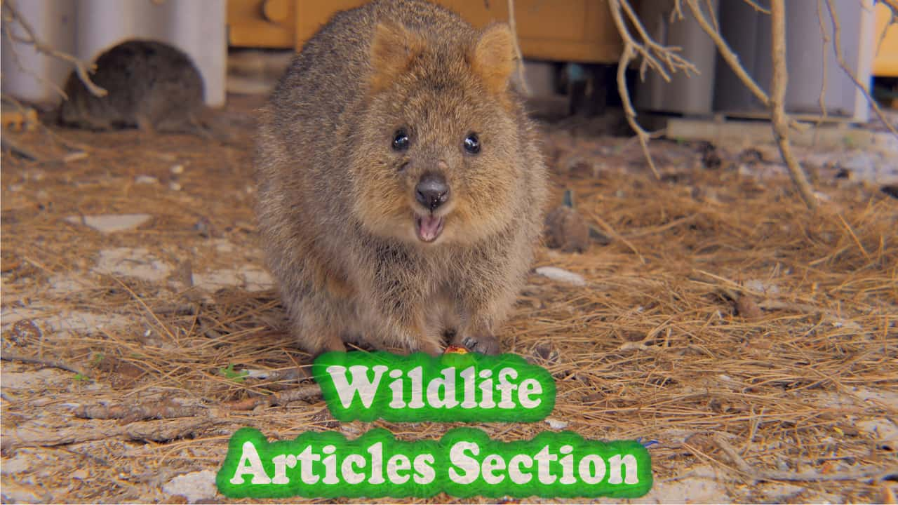 Wildlife articles section category Perth now